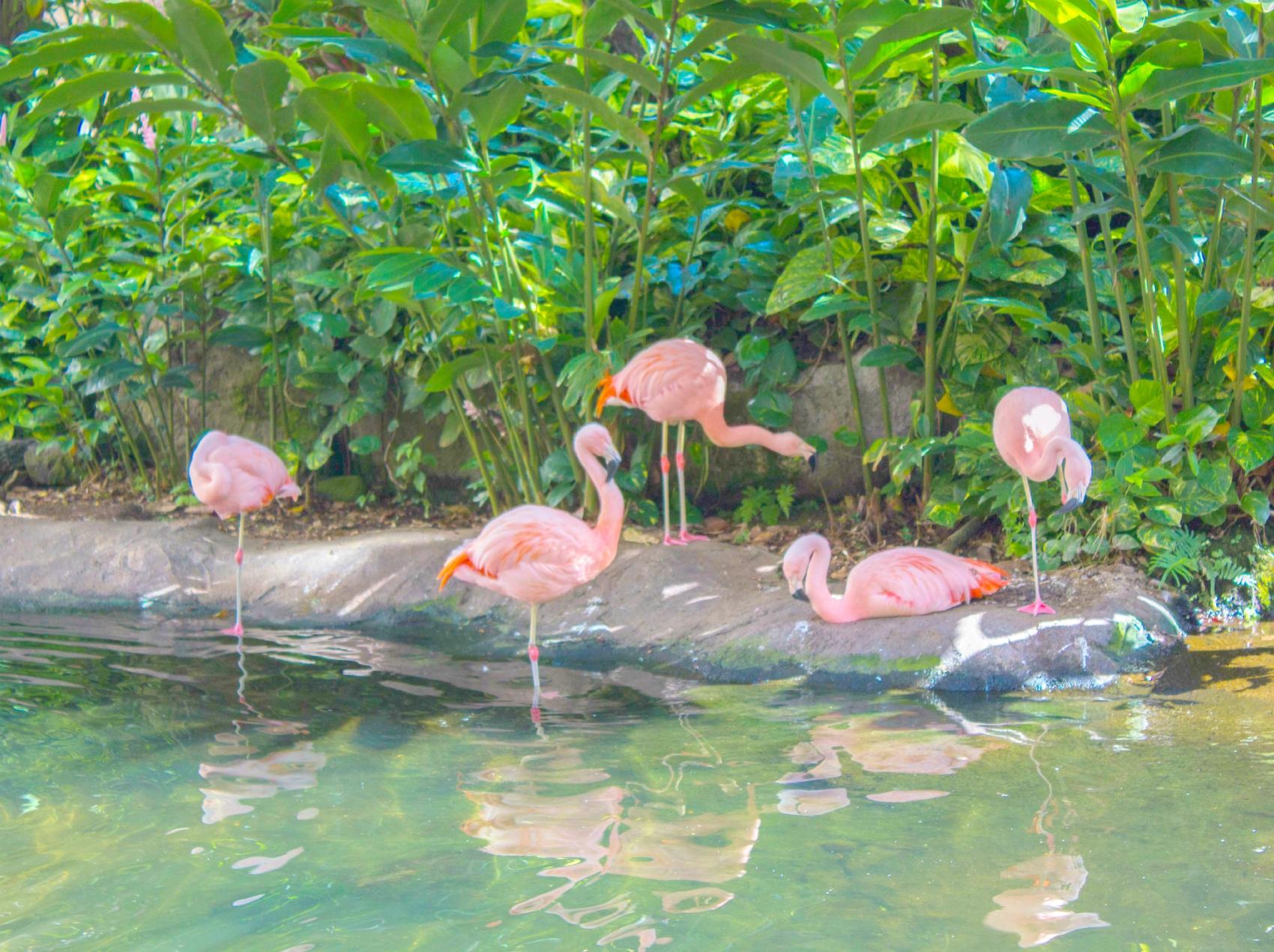 Preppy Pink Flamingo