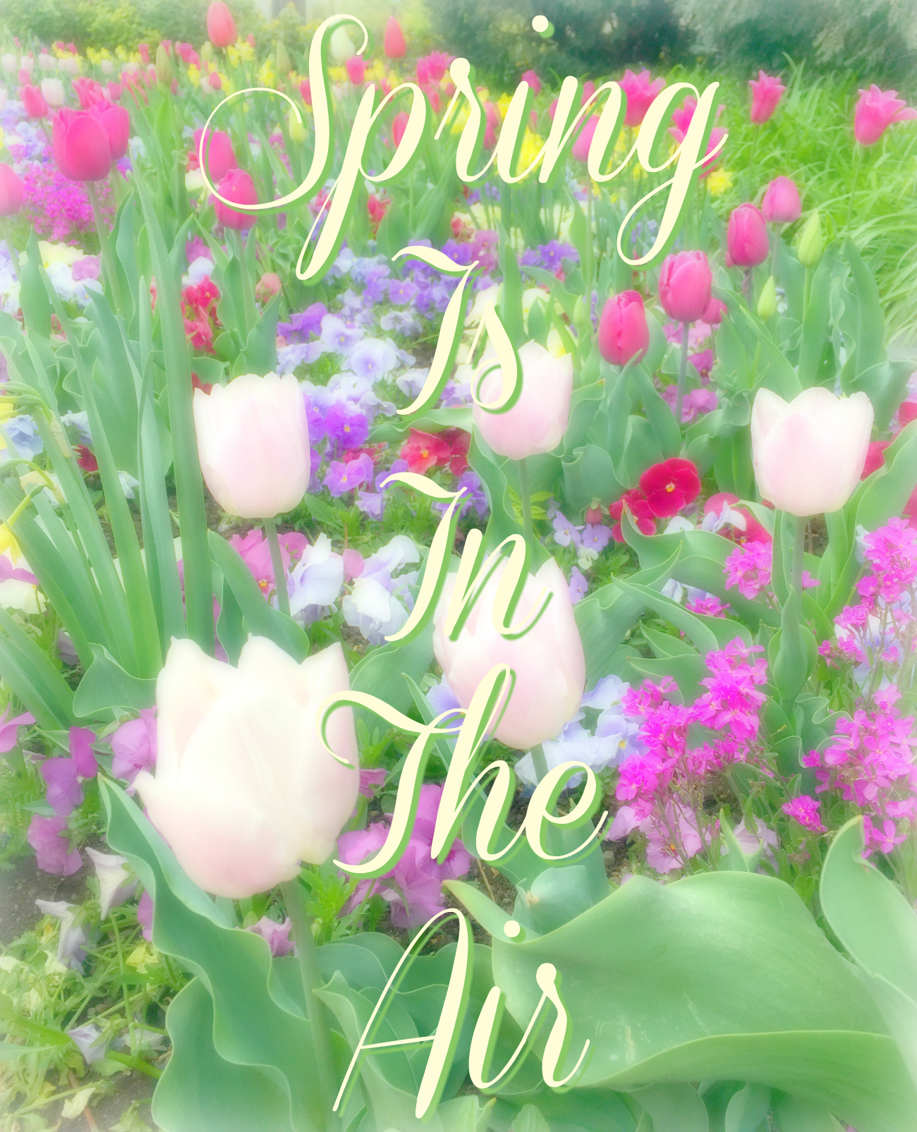 Spring flowers quote official