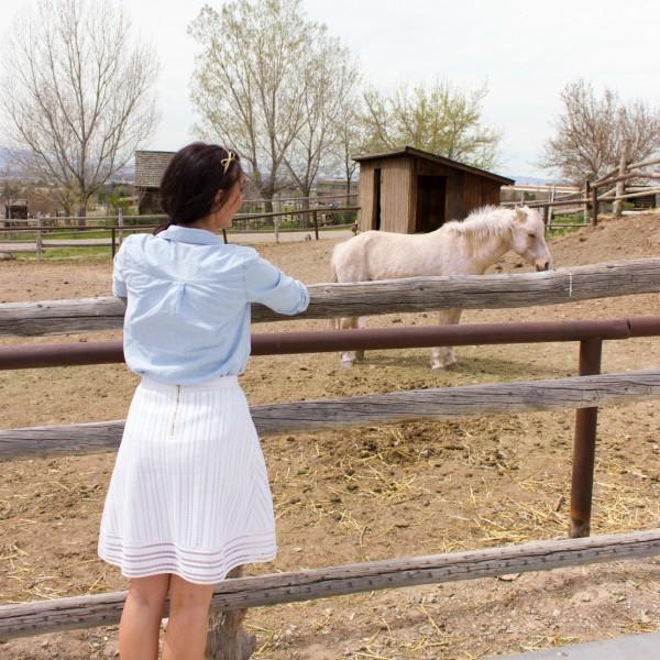 baby animal days pony