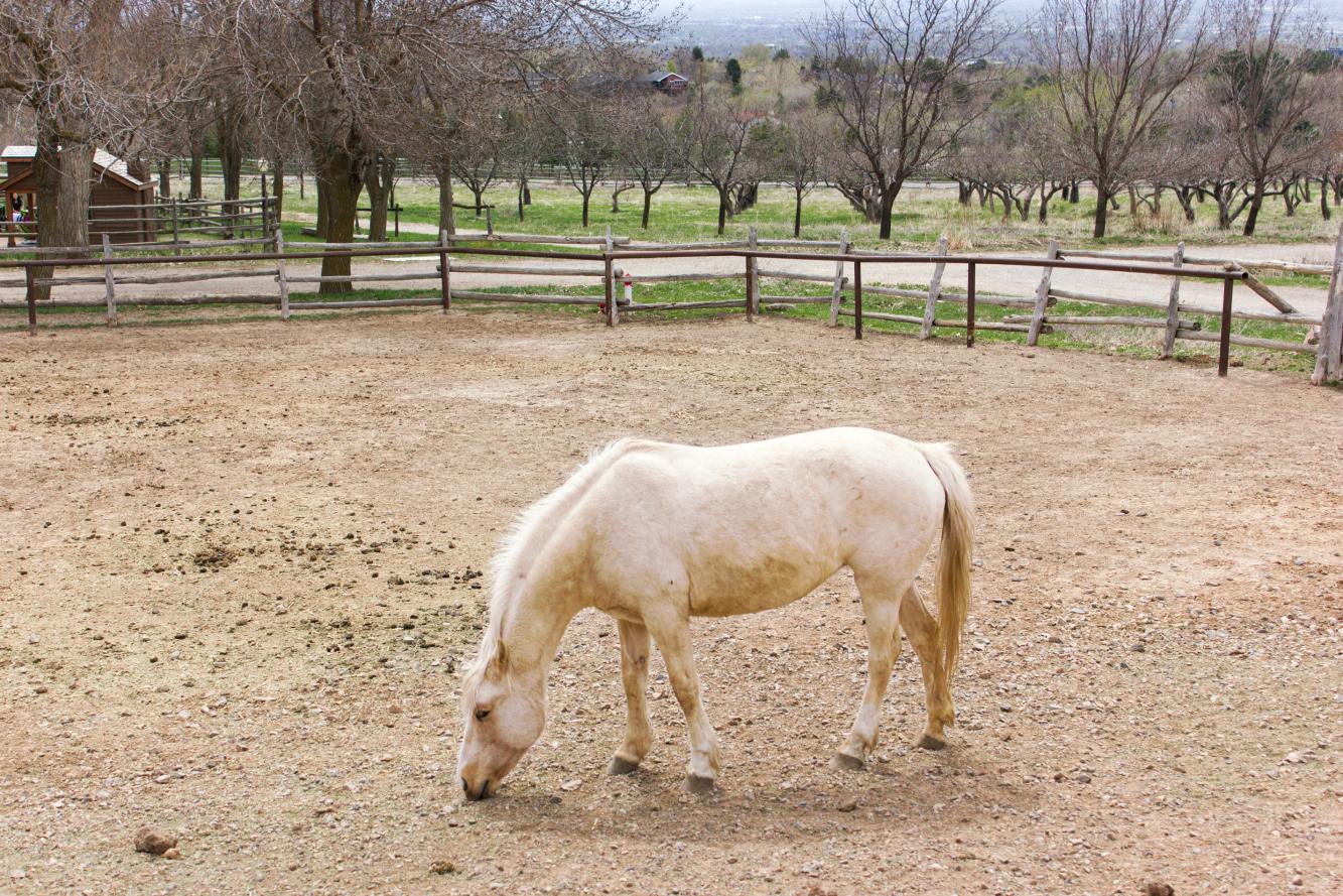 pony baby animal days